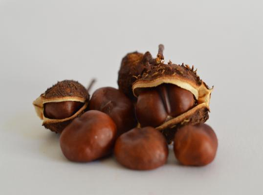 chestnuts in shells and out of shells